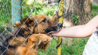 Осиновяват животни само заради разходките навън
