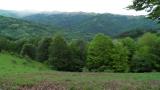 Предвиждат санитарна сеч на 78 730 дка иглолистни гори