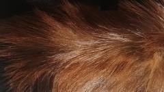 Митничарите на летище София задържаха над 5500 парчета кожи с косъм