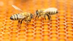 Пчелините в държавни гори ще се разрешават от Горските стопанства