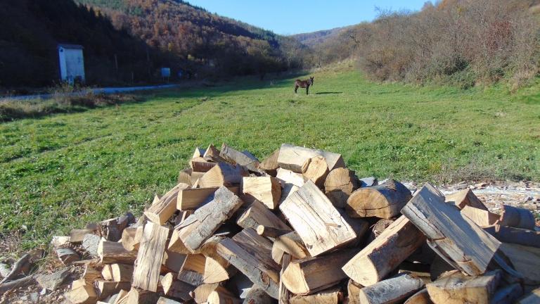 Над 35 кубика незаконна дървесина задържаха служителите при РДГ -