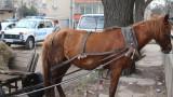Готвят пълна забрана на каруците по софийските улици