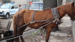 3 коня, 3 каруци и дърва задържаха горски в Ихтиман