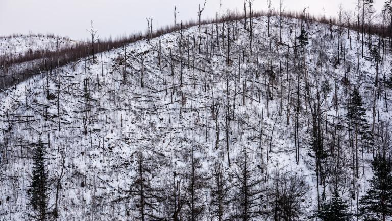 Ураганни ветрове в Смолянско повалиха 46. хил. куб. м дървета