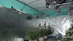 Разкриха наркооранжерия в спортна зала в Разград