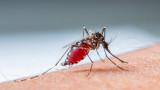 Защо комарите хапят едни хора повече от други