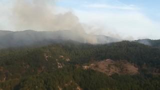 Пожар гори при сръбската граница край кюстендилското село Трекляно