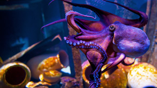 Защо не бива да правим ферми за октоподи