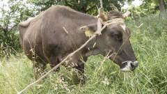 """Разследват случай на убити домашни животни в местността """"Лаката"""""""