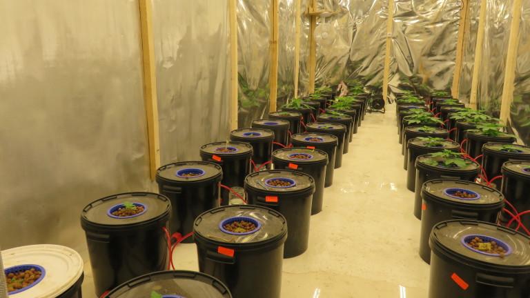 Полицията погна оранжерия за марихуана в производствен цех край Дупница.