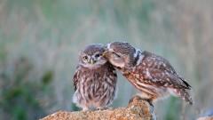 Екоинспекцията спаси две защитени птици в Пловдив