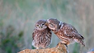 САЩ и Канада са загубили 3 млрд. птици от 1970-а