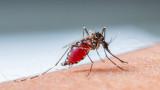 СЗО започва кампания за изкореняване на маларията в 25 държави до 2025 г.