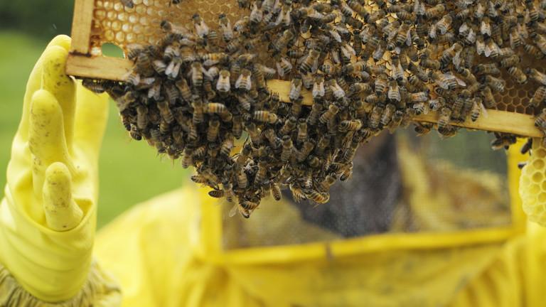 Е-платформа предупреждава пчеларите за пръскания с пестициди