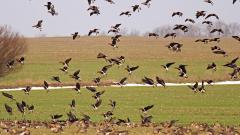 Забраниха свободното отглеждане на птици в Ямболско