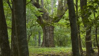 Богатството на българската природа