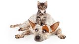 Кучета срещу котки