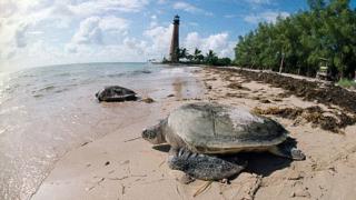 Пет от най-хубавите плажове в САЩ, II част