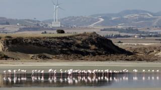 Десетки изтровени с оловни сачми фламинго в Гърция