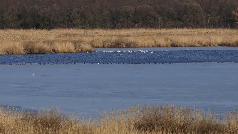 """Екологична катастрофа заплашва резерват """"Сребърна"""""""