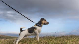 Мъж простреля с въздушна пушка куче в Бургас