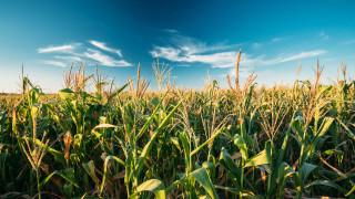 Цените на царевицата и соята на борсите удариха над 6-годишен рекорд