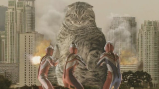Котки превземат света