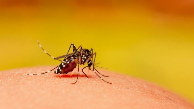 Слабото място на комарите
