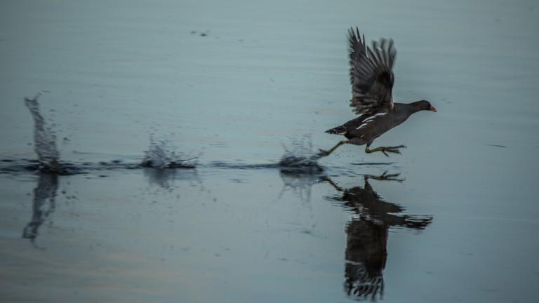7 животни, които могат да ходят по вода