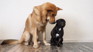 Кои са по-умни - малките или големите кучета