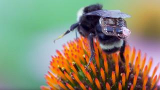 Пчели с раници ще помагат в земеделието