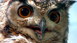 Спряха незаконна продажба на защитени птици