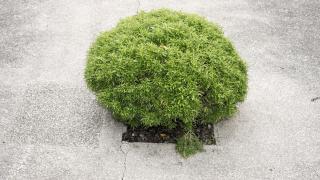 Съставиха акт на фирмата, изляла тонове бетон върху дървета край Търговище