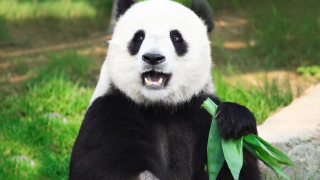 Голямата новина на зоопарк в Токио