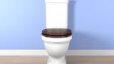 Индия е свидетел на най-масово производство на тоалетни чинии