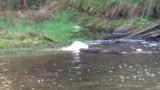Вторите проби не показват замърсяване на реките Юговска и Чепеларска