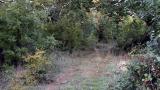 Трупът на Стоянов открит заровен в горичка край Обзор