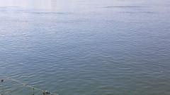Мъртва риба в река Огоста установиха инспектори