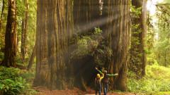 Колко е високо най-високото дърво в света