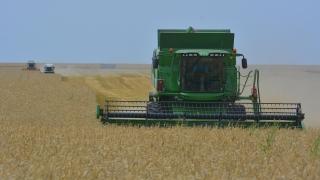 12% повече площи, засети с пшеница тази година