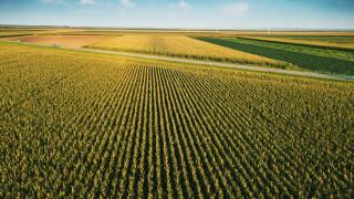 Сезонните работници, които берат реколтата в Западна Европа, са блокирани на границите
