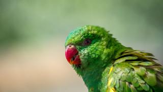 Мъжът, който храни стотици папагали три пъти на ден