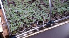 Откриха две наркооранжерии в Бухово