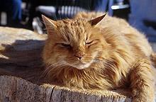 25 години затвор грозят американчета, подпалили котка