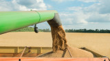 Прибрани са 4,5 милиона тона пшеница при 97% от площите