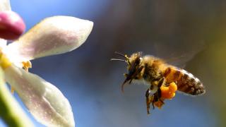 """Пчелите – по-добри """"математици"""" от компютрите"""