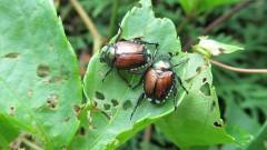Жегите могат да унищожат плодовитостта на мъжките индивиди в природата
