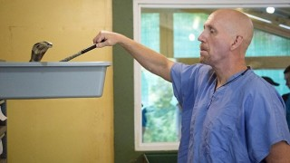 Човекът, който работи сред най-отровните змии, за да спасява животи