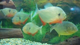 Риба в много мътна вода
