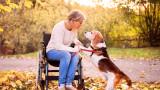 Кучетата, емпатията към човека и кога се притичват на помощ